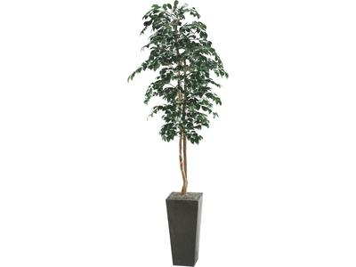 This 8 foot tall Sakai tree features a metal pot.